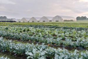Picture of crops in front of a row of greenhouses